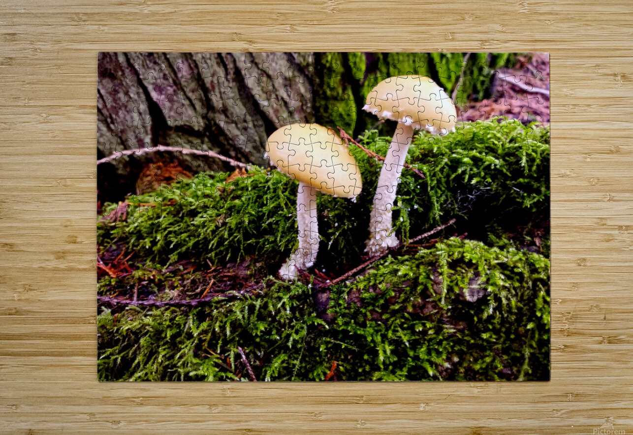 Tiny World 6 of 8  HD Metal print with Floating Frame on Back