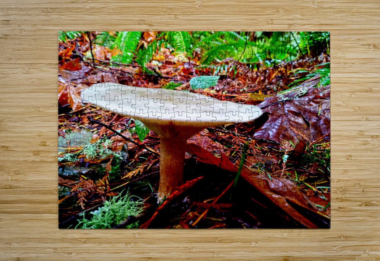 Tiny World 4 of 8 - Mushrooms and Fungi  HD Metal print with Floating Frame on Back
