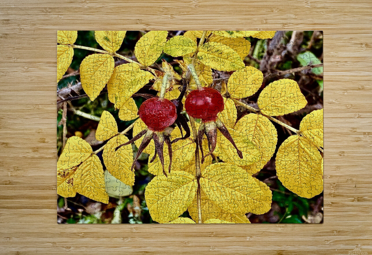 Two Red Berries  HD Metal print with Floating Frame on Back