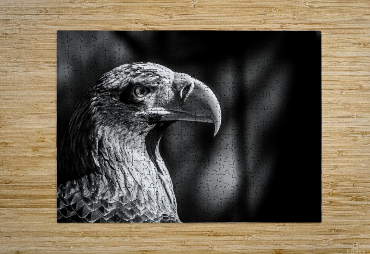 Eagle ap 2046 B&W  HD Metal print with Floating Frame on Back