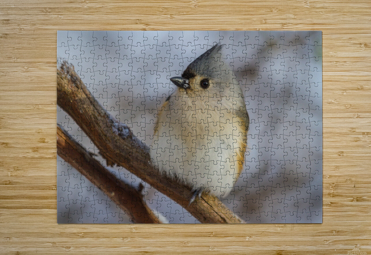 Titmouse ap 1868  HD Metal print with Floating Frame on Back
