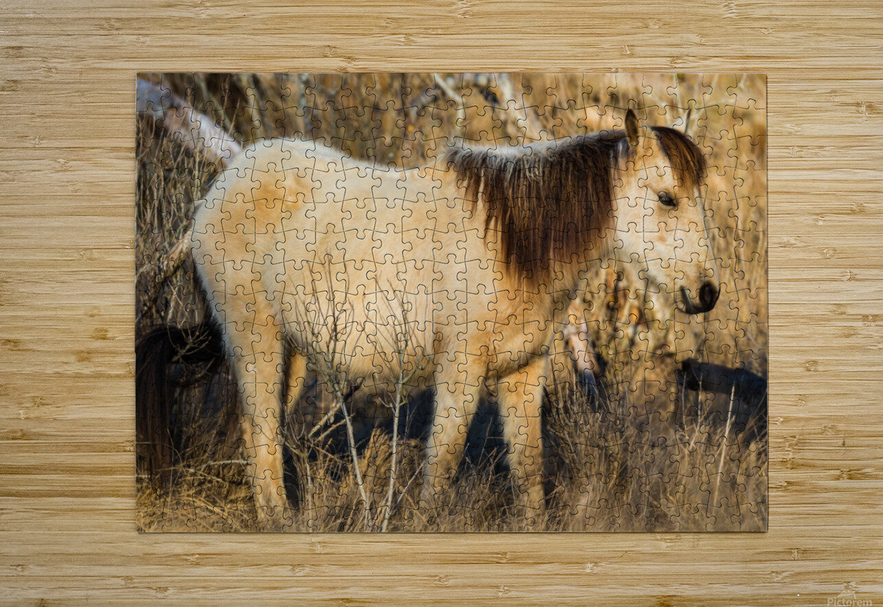 Wild Horse ap 2740  HD Metal print with Floating Frame on Back