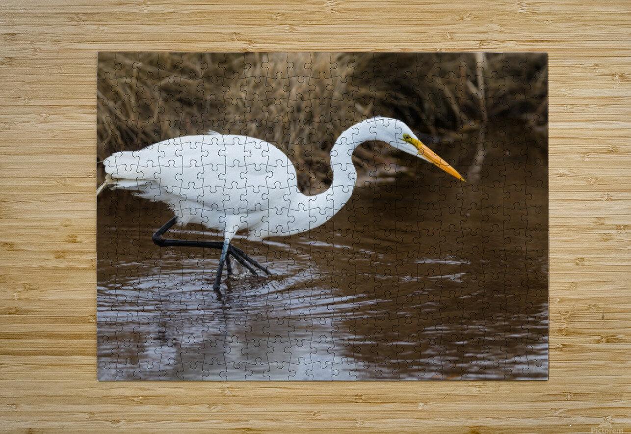 Great White Egret ap 2802  Impression métal HD avec cadre flottant sur le dos