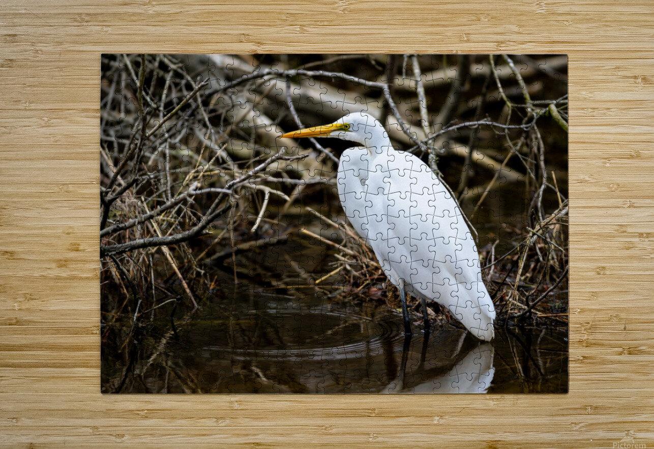Great White Egret ap 2807  Impression métal HD avec cadre flottant sur le dos