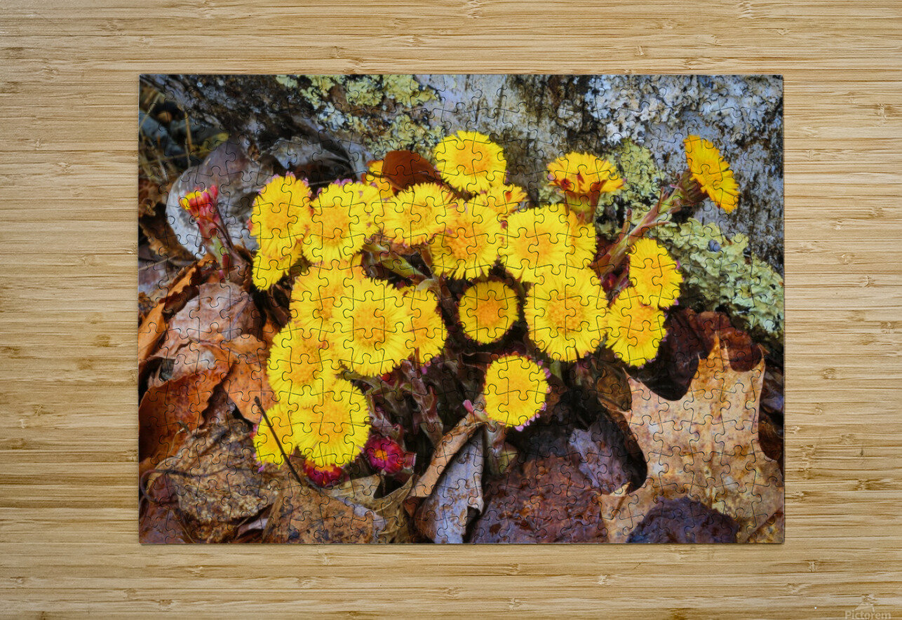 Flowers ap 2222  HD Metal print with Floating Frame on Back