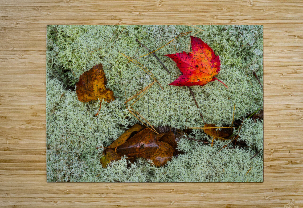 Leaves  N  Lichen ap 1553  HD Metal print with Floating Frame on Back
