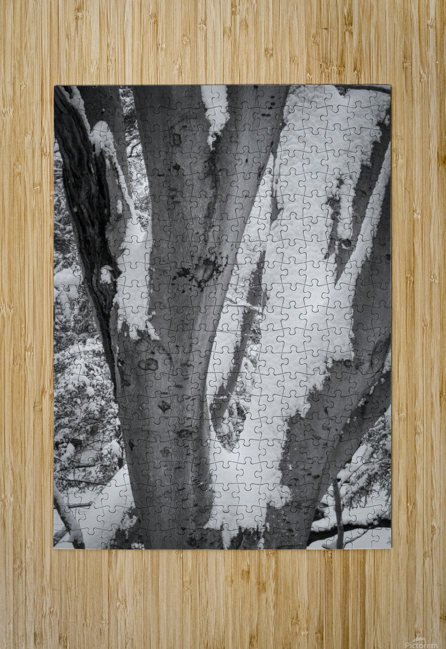 Beech ap 2044 B&W  HD Metal print with Floating Frame on Back