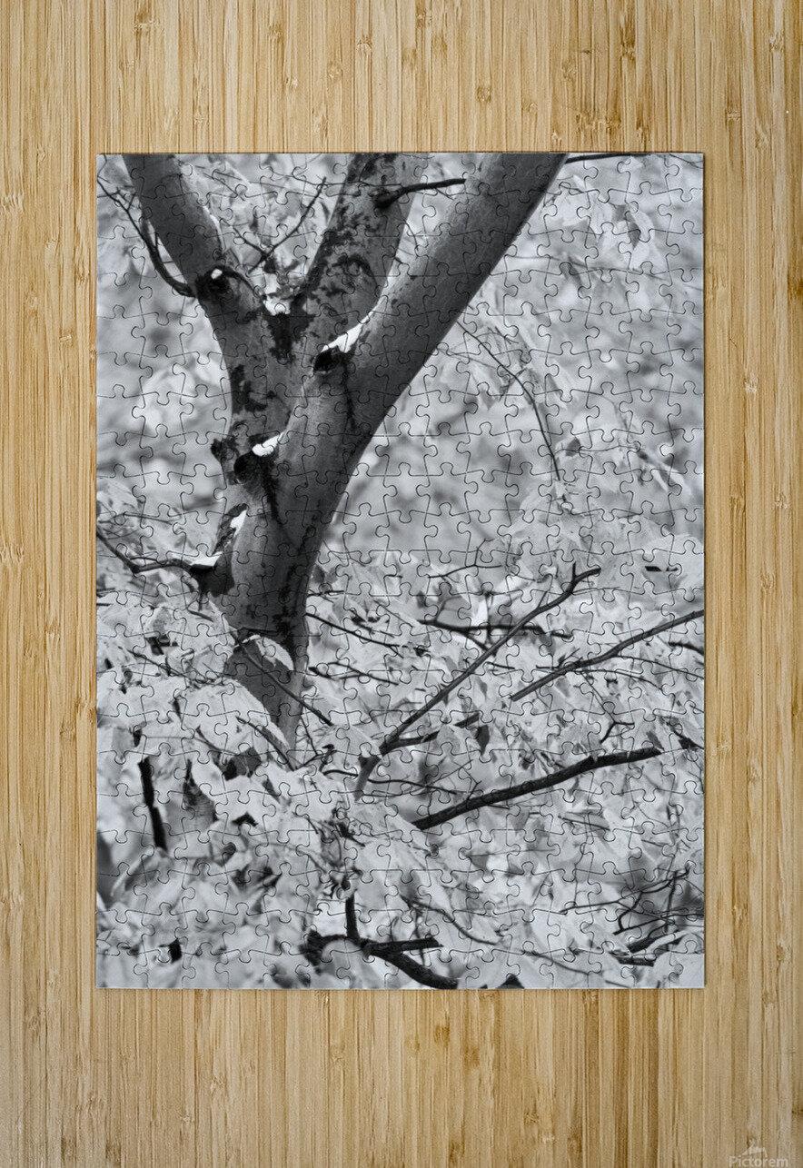 Beech Tree ap 1586 B&W  HD Metal print with Floating Frame on Back