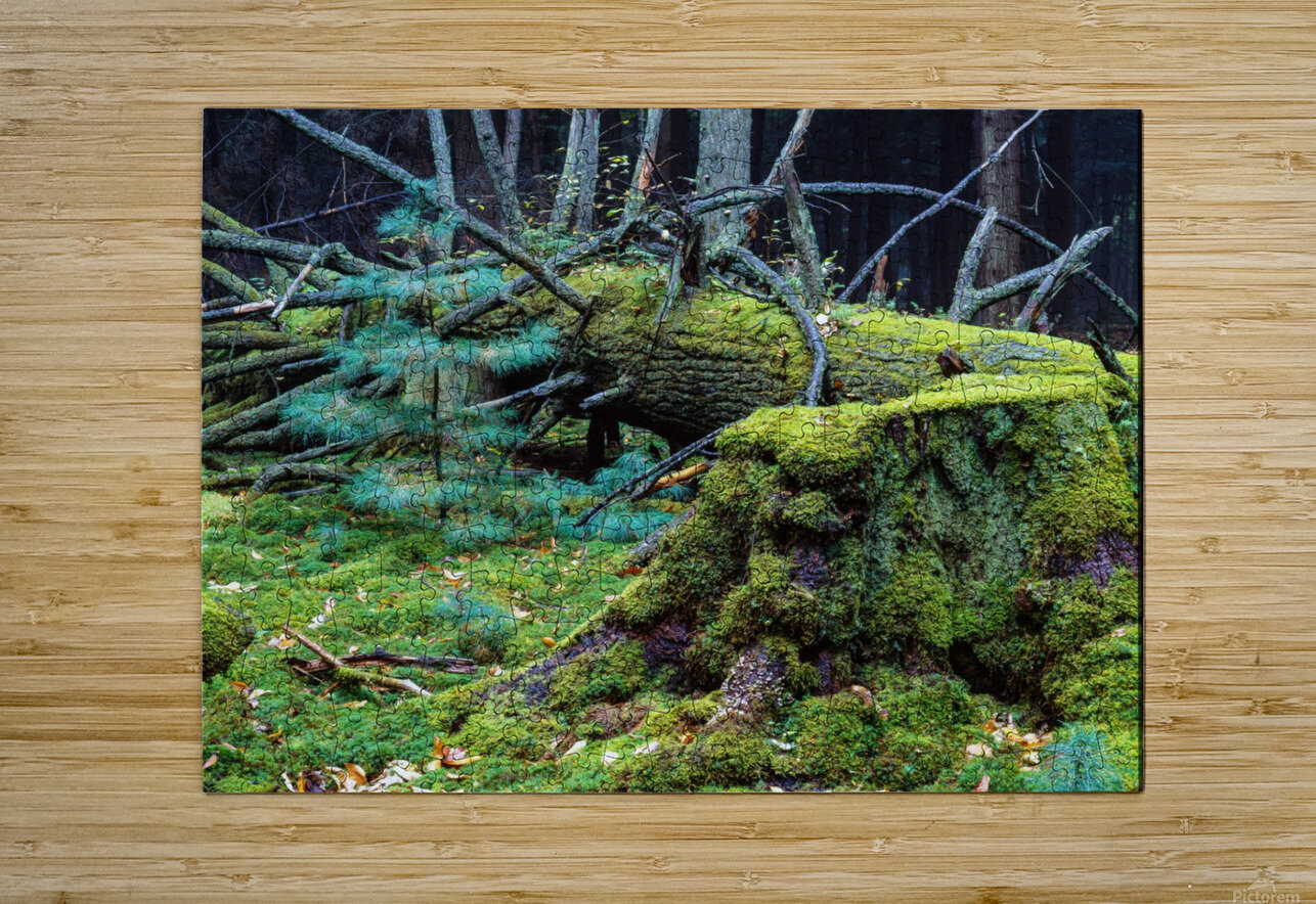 Fallen Giant ap 1513  HD Metal print with Floating Frame on Back