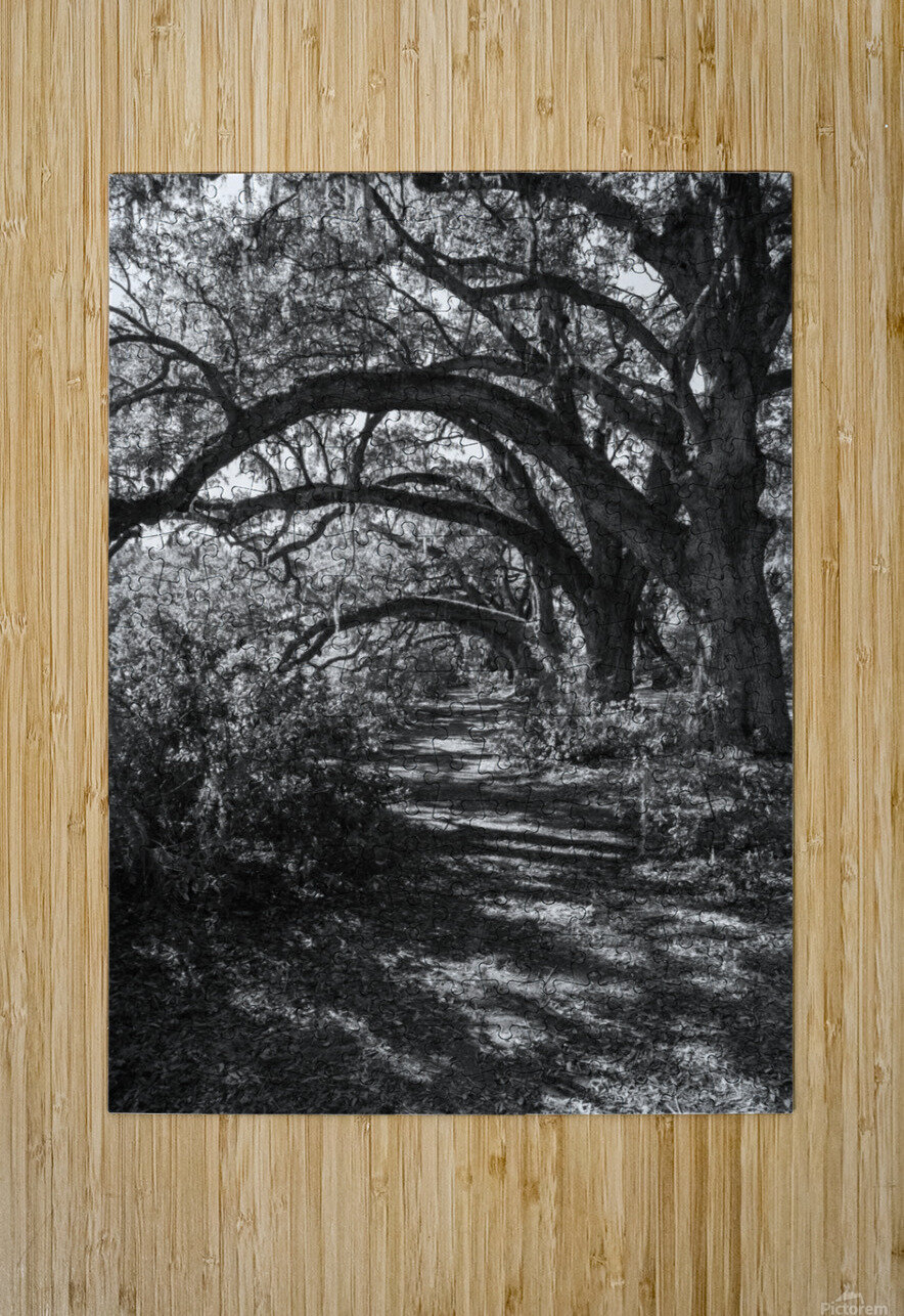 Nature Trail ap 2081 B&W  HD Metal print with Floating Frame on Back
