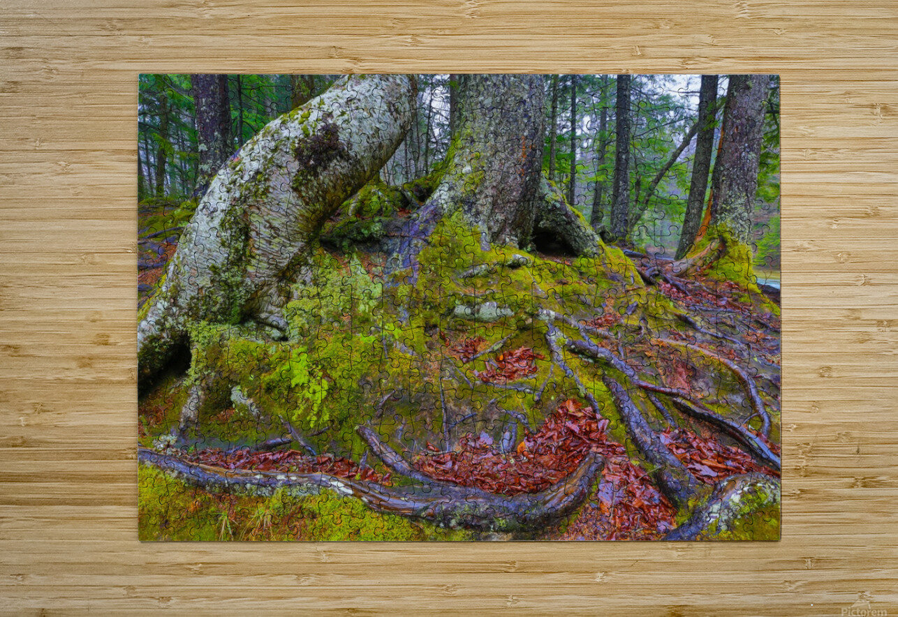 Moss   Lichen ap 2196  HD Metal print with Floating Frame on Back