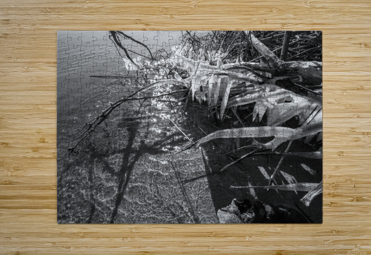 Sparkles ap 1595 B&W  HD Metal print with Floating Frame on Back
