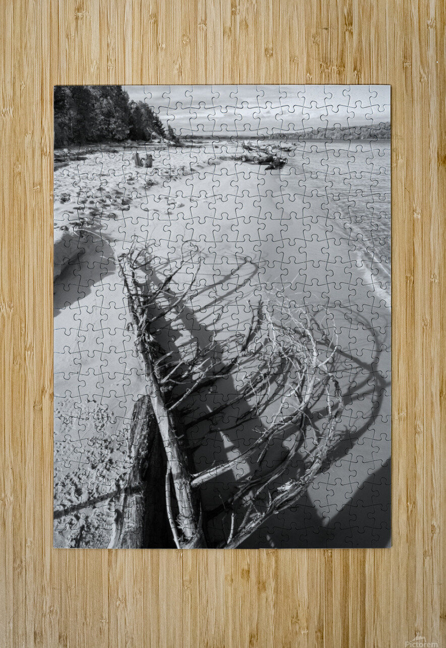 Driftwood ap 2482 B&W  HD Metal print with Floating Frame on Back