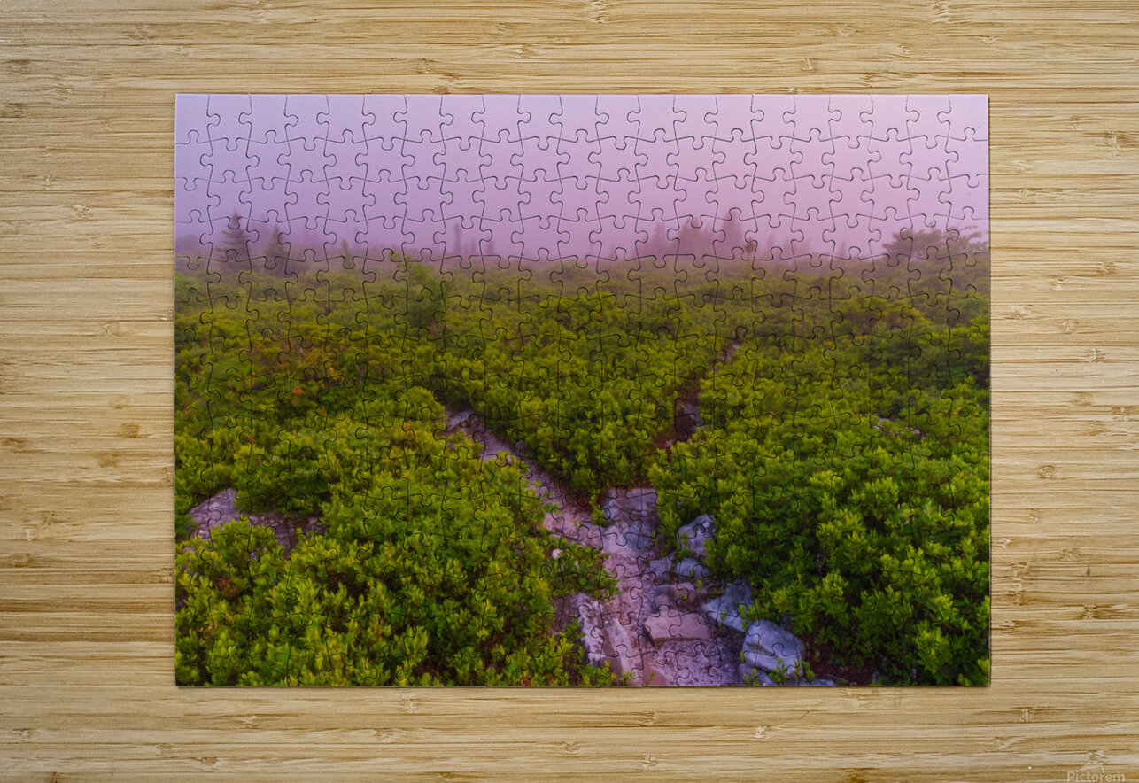 Blueberries ap 1900  HD Metal print with Floating Frame on Back