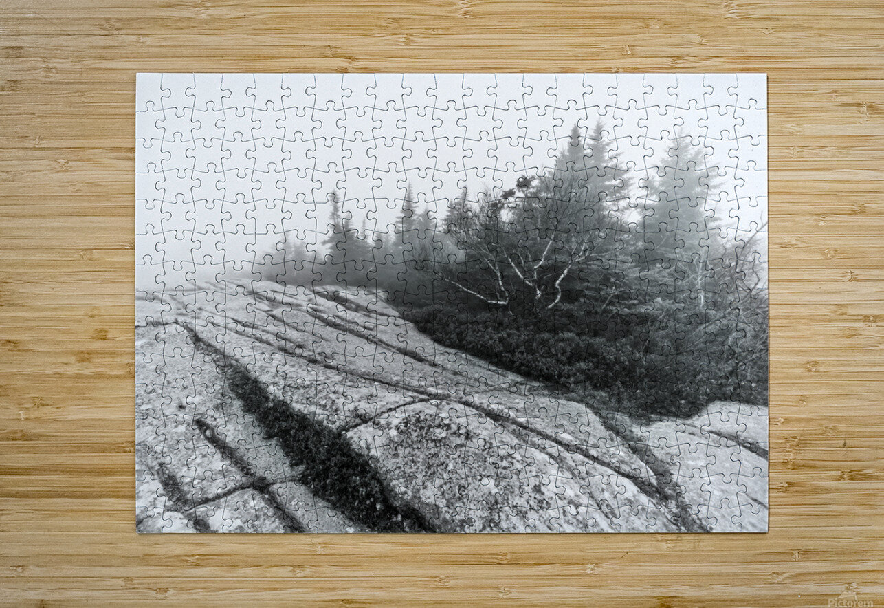 Lichen and Granite ap 2340 B&W  HD Metal print with Floating Frame on Back