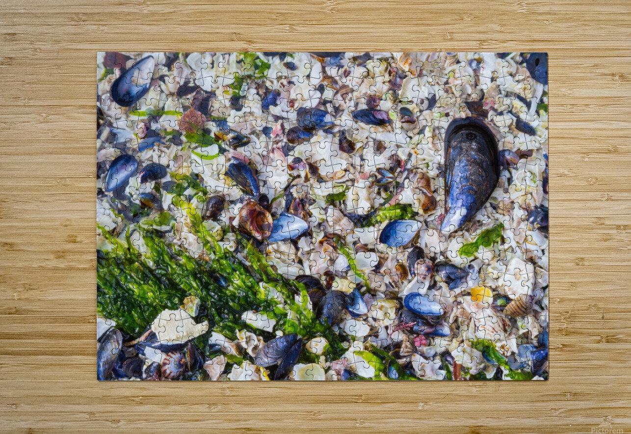 Barnacle Shells ap 1528  HD Metal print with Floating Frame on Back