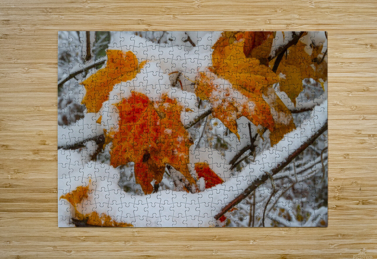 Early Snow ap 1571  HD Metal print with Floating Frame on Back