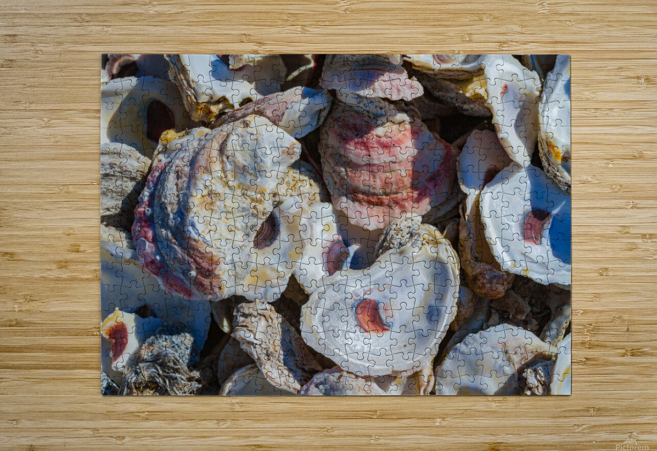 Shells ap 1747  HD Metal print with Floating Frame on Back