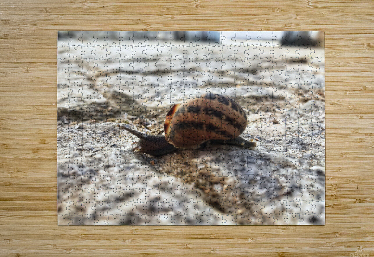 Little snail in the village of Portugal  HD Metal print with Floating Frame on Back