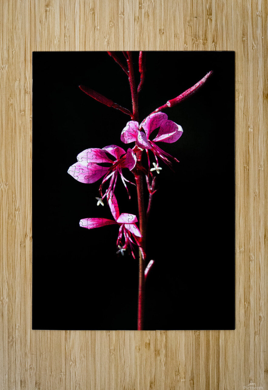 Love Flower  HD Metal print with Floating Frame on Back