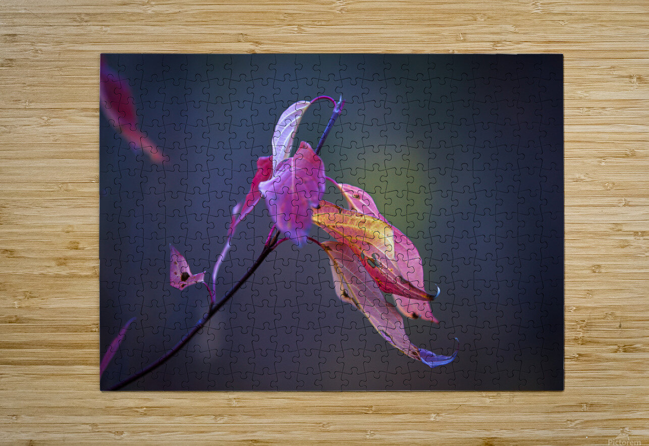 Fall Leaves Us Wanting More  HD Metal print with Floating Frame on Back