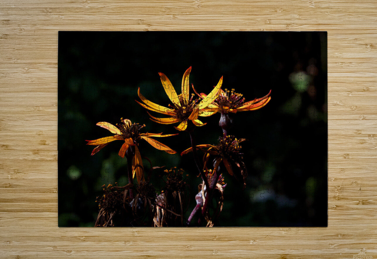 Fire Flower  HD Metal print with Floating Frame on Back