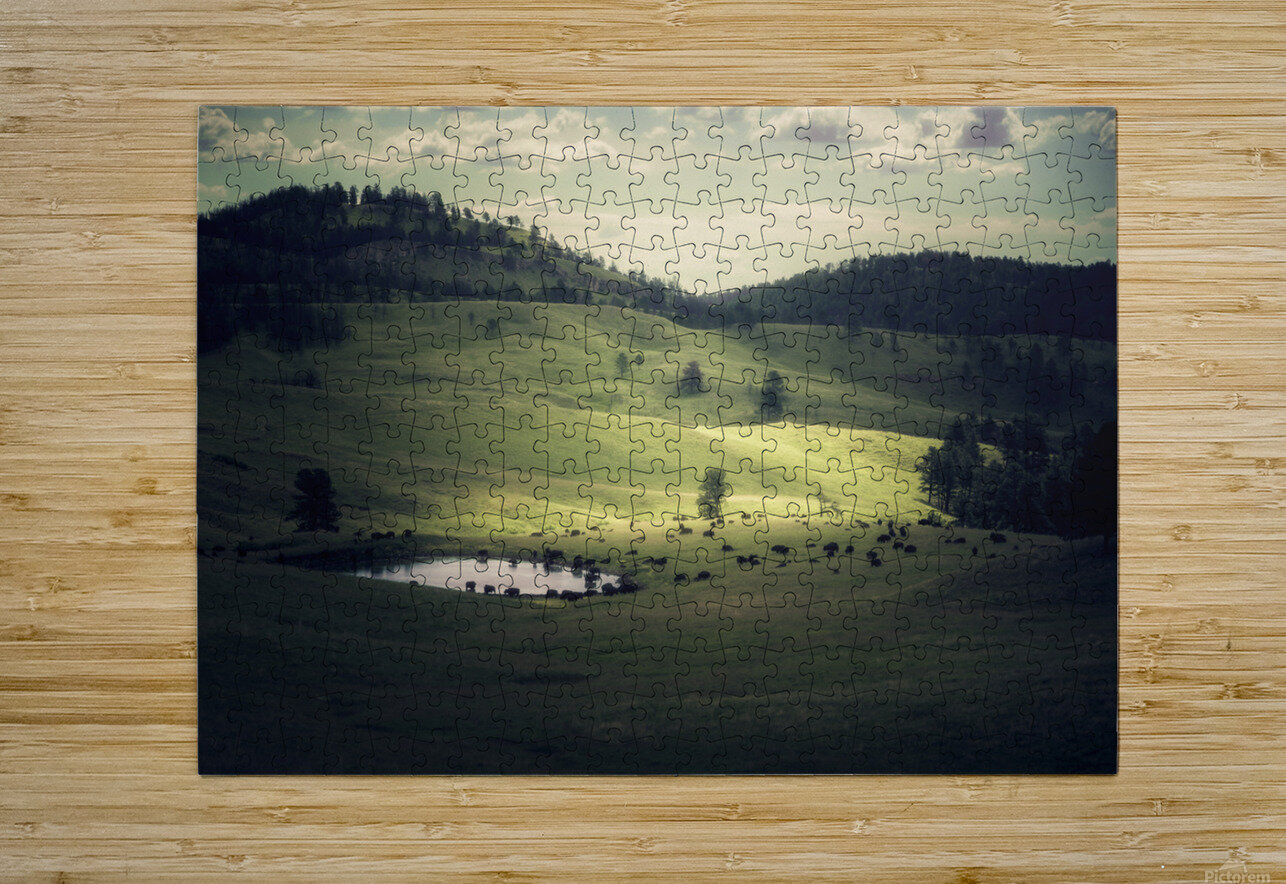 Where The Bison Roam  HD Metal print with Floating Frame on Back