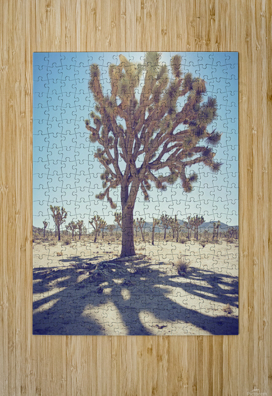 Joshua Tree National Park  HD Metal print with Floating Frame on Back