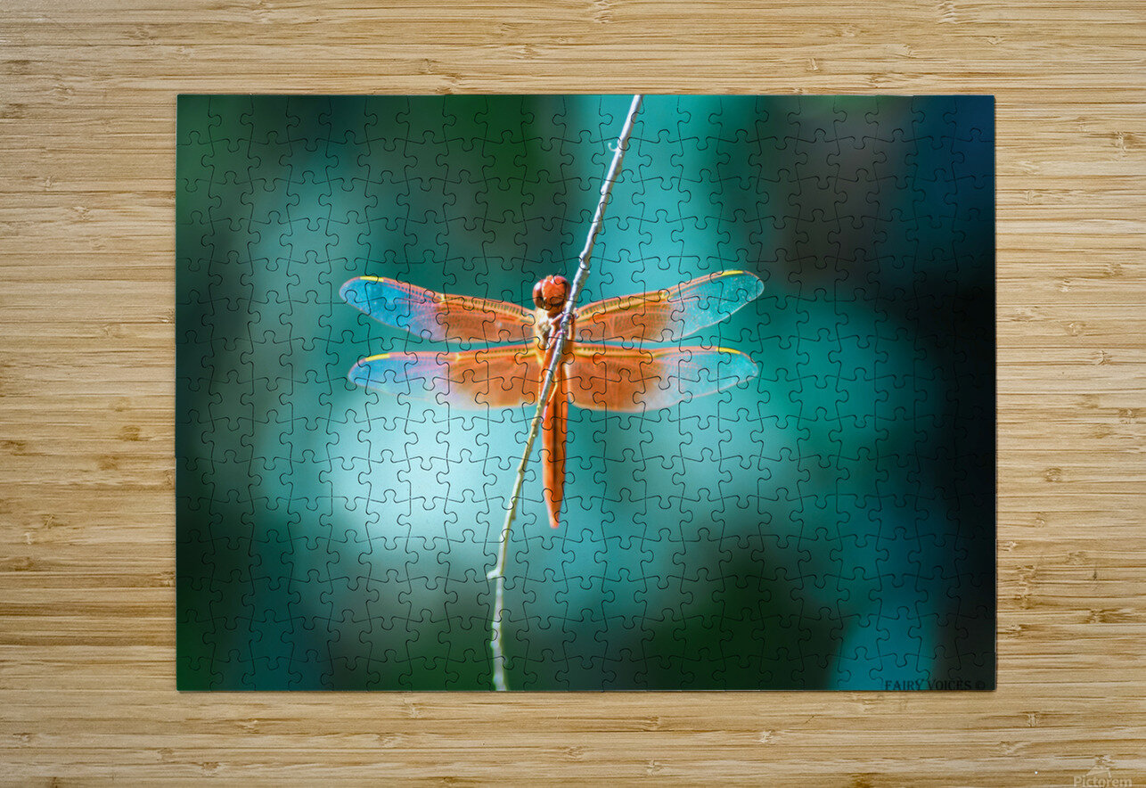 KINDNESS IS THE KEY TO MAGIC collection 1-4  HD Metal print with Floating Frame on Back