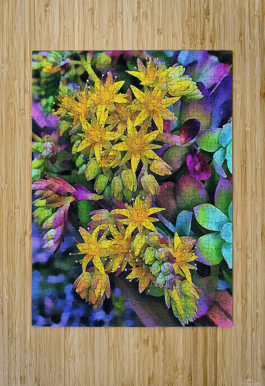 Echeveria Hybrid With Yellow Flowers  HD Metal print with Floating Frame on Back