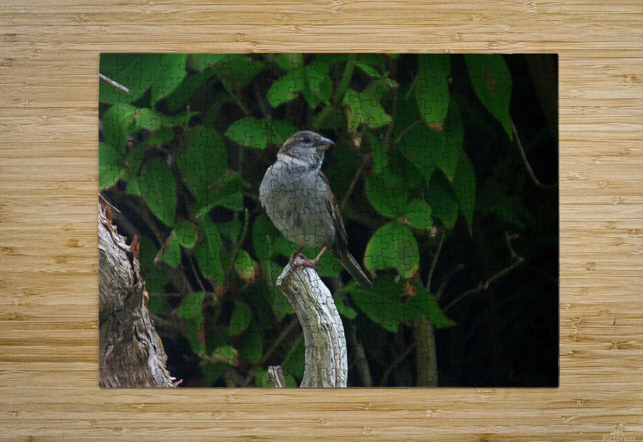 opportuniste    plumes  HD Metal print with Floating Frame on Back