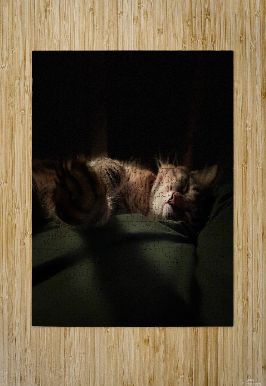 In the Shadows of the Night  HD Metal print with Floating Frame on Back