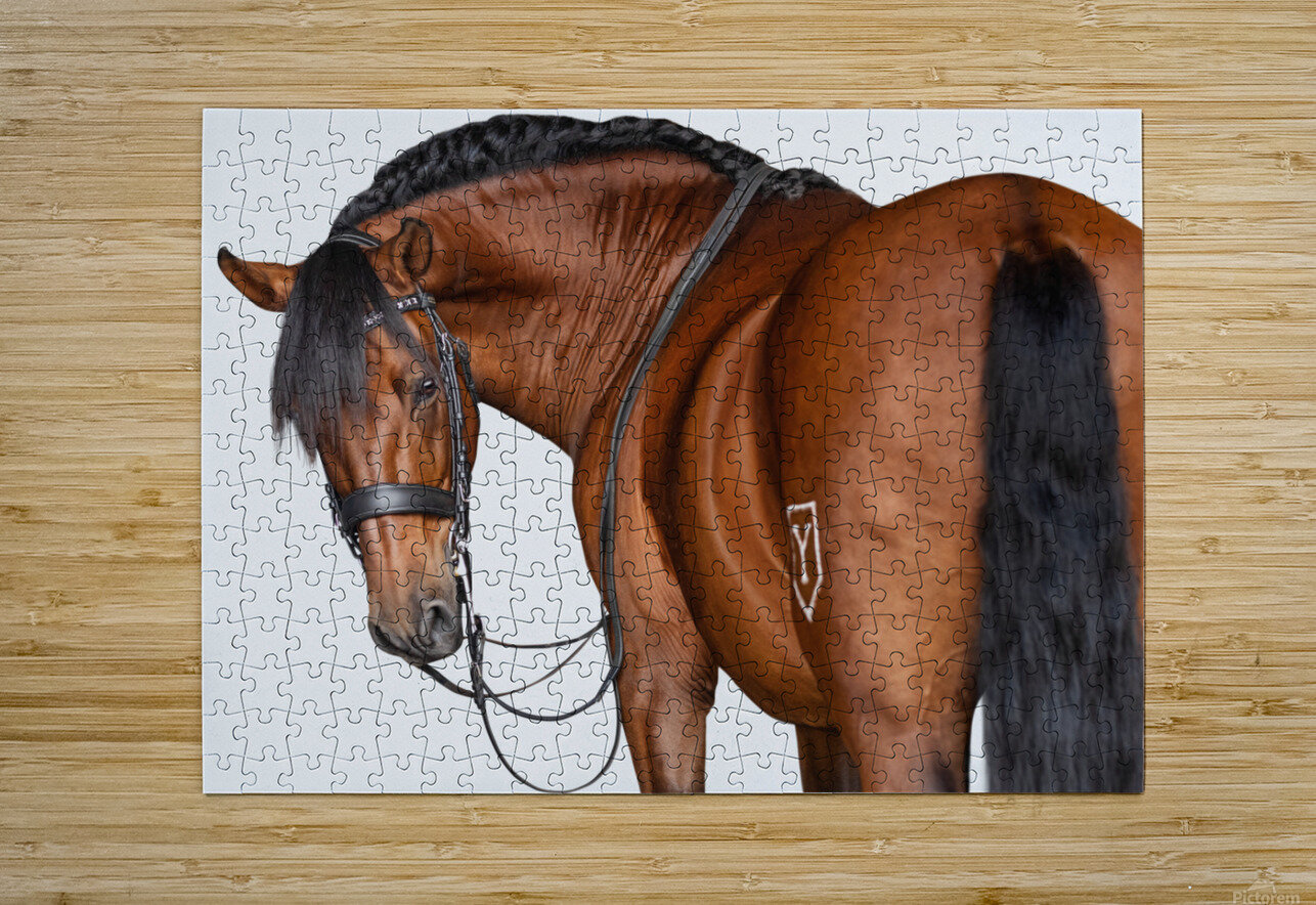 Bay Horse Portrait  HD Metal print with Floating Frame on Back
