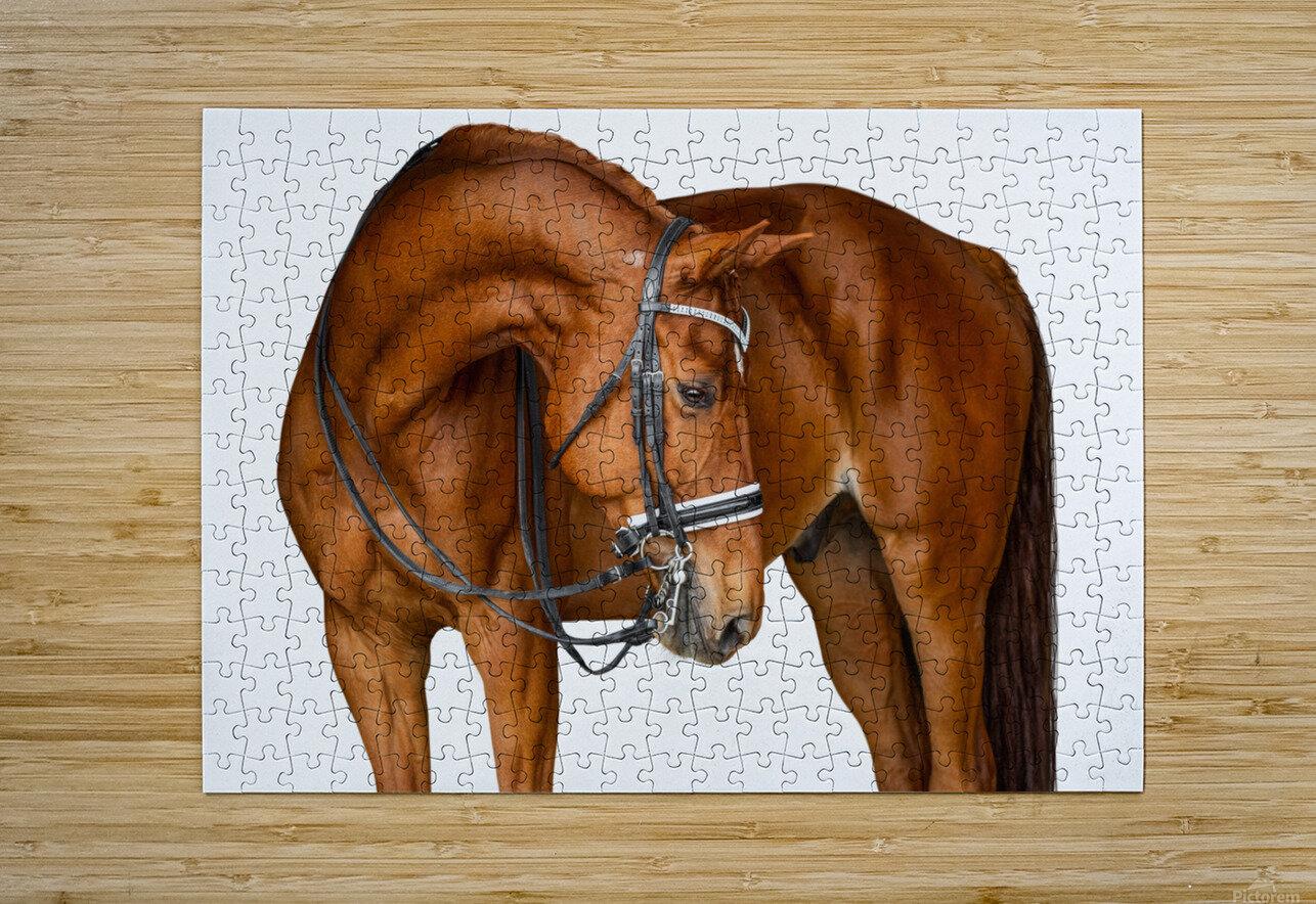 Chestnut Horse Portrait  HD Metal print with Floating Frame on Back