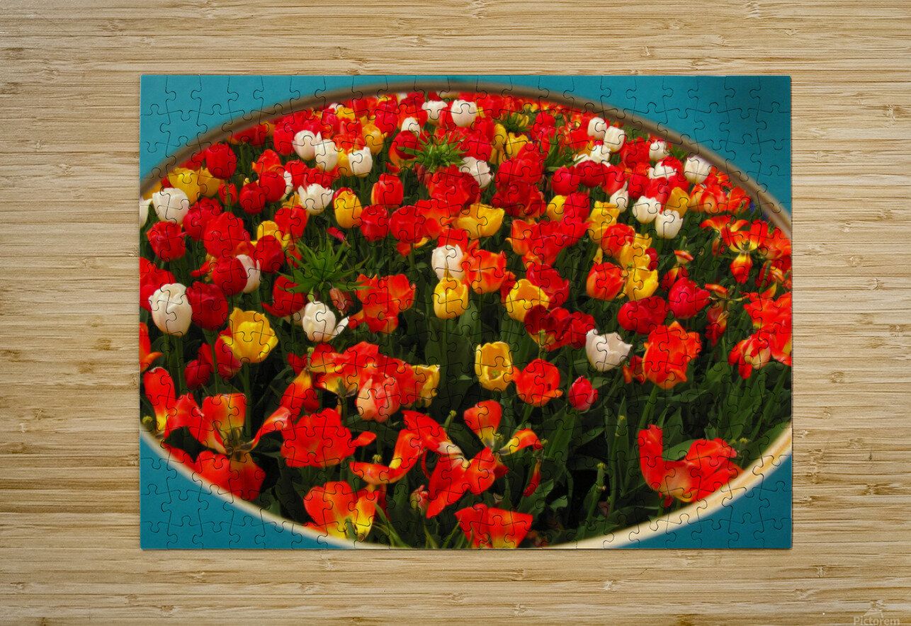 Parade of Tulips  HD Metal print with Floating Frame on Back