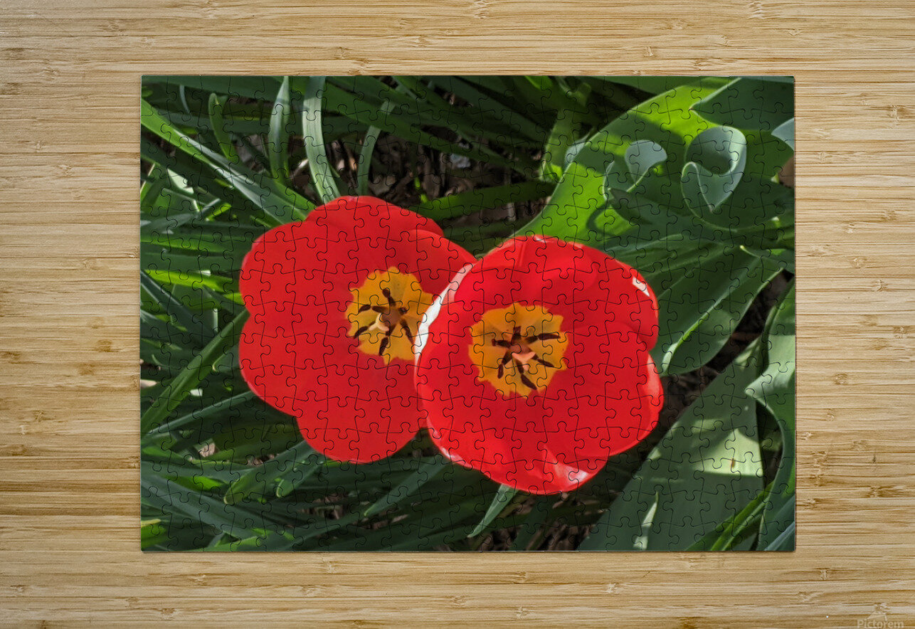 Twins  HD Metal print with Floating Frame on Back