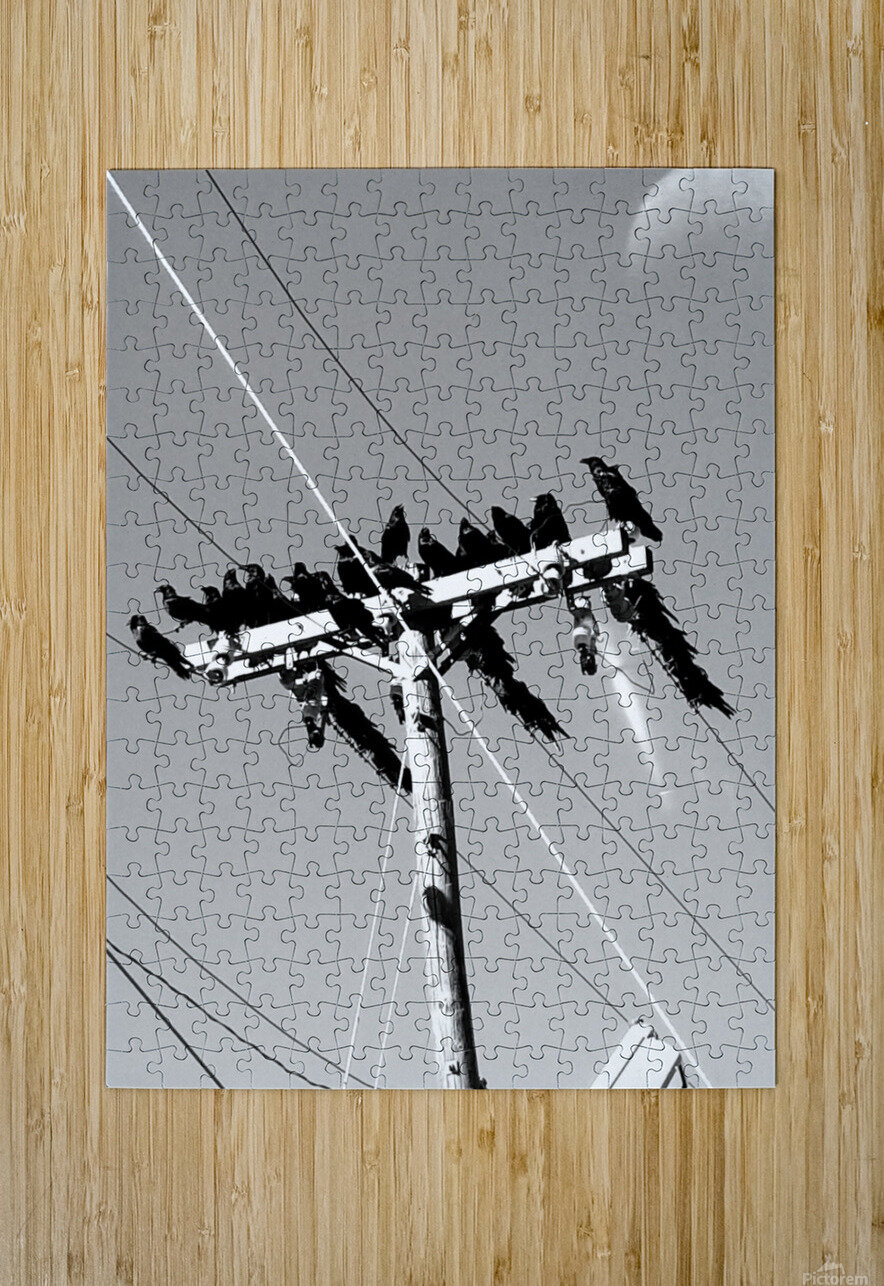 Birds on a wire  HD Metal print with Floating Frame on Back
