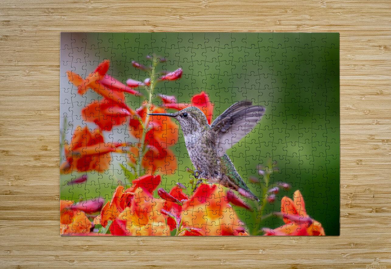 Hummingbird  HD Metal print with Floating Frame on Back
