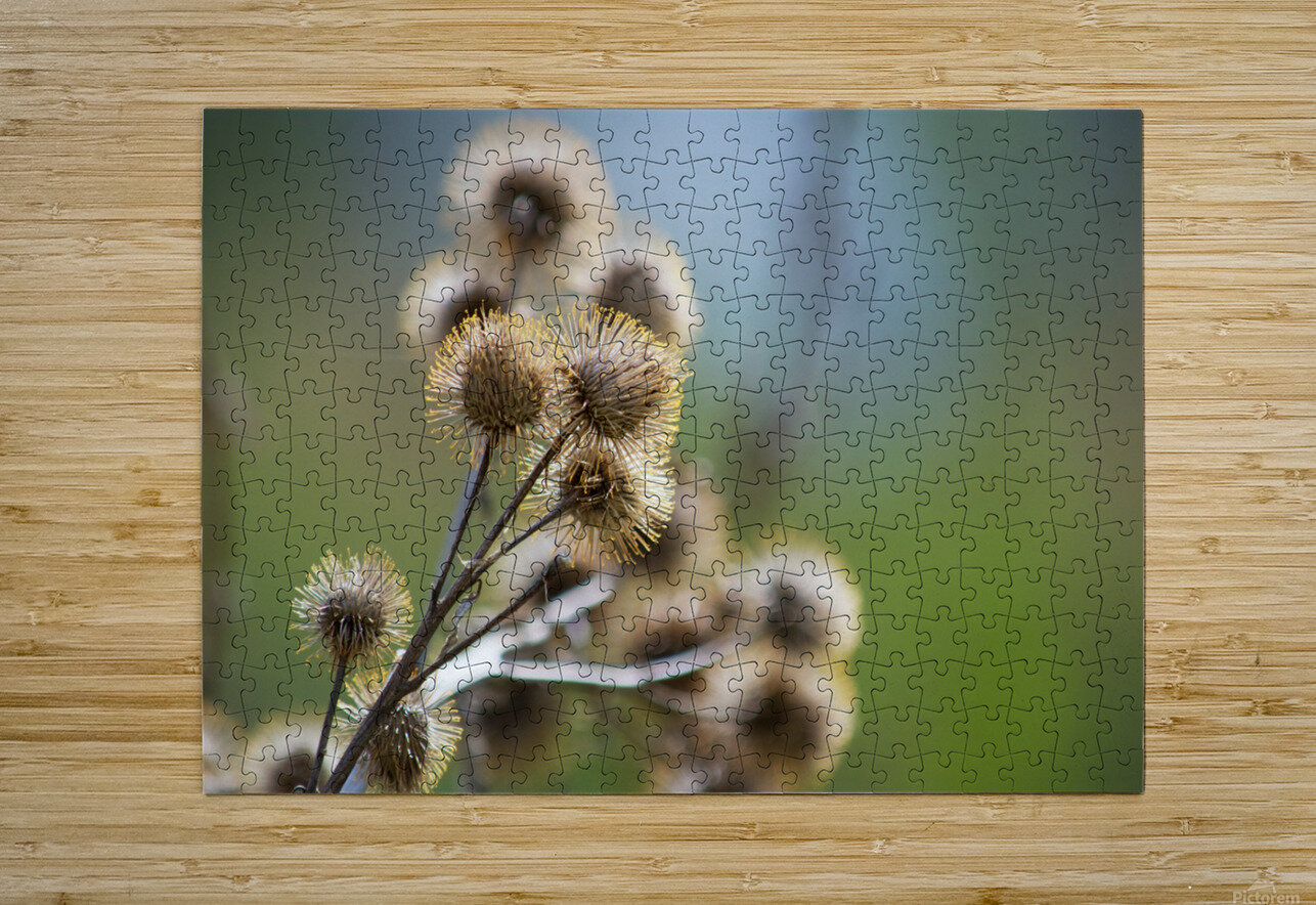 Burdock Bouquet  HD Metal print with Floating Frame on Back
