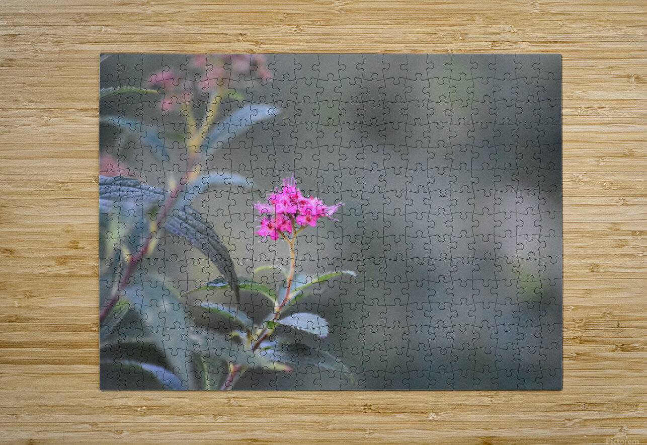2965  HD Metal print with Floating Frame on Back