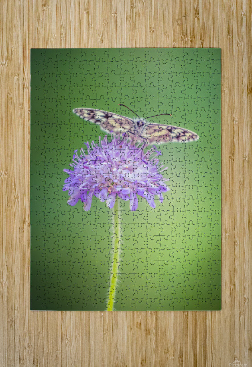 Butterfly  HD Metal print with Floating Frame on Back