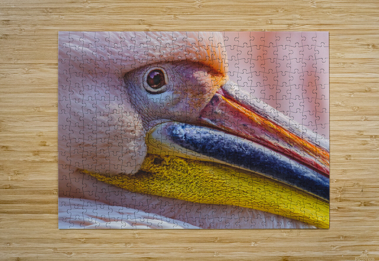 Pelican portrait  HD Metal print with Floating Frame on Back