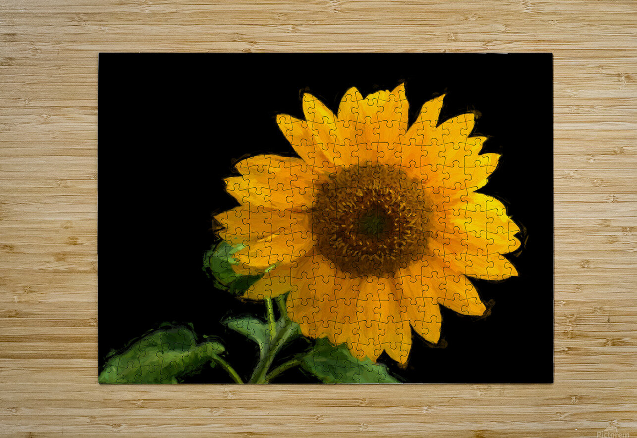Solitary Sunflower  HD Metal print with Floating Frame on Back