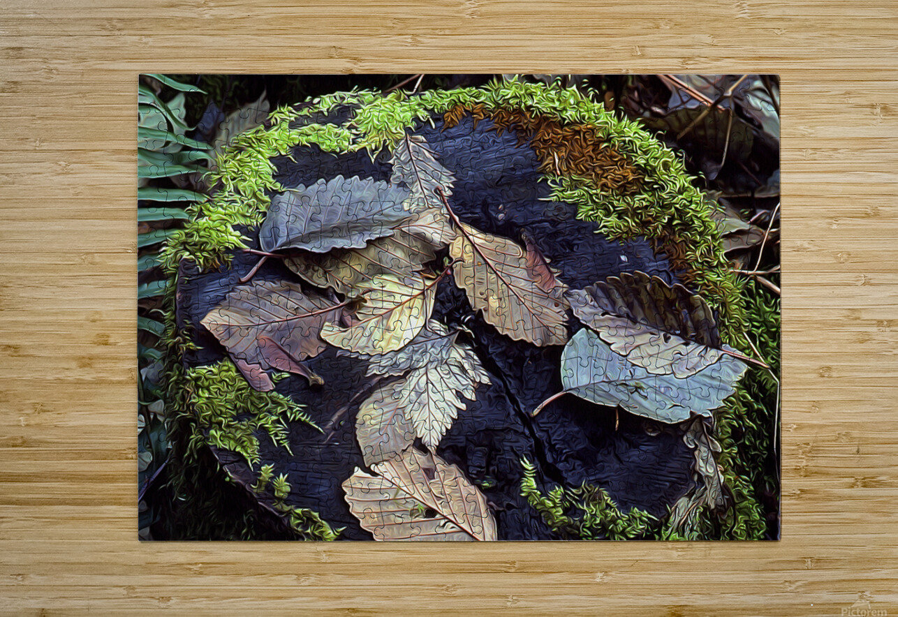 Mossy Stump  HD Metal print with Floating Frame on Back