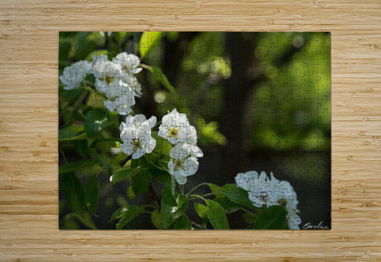Poirier en fleurs 1   Impression métal HD avec cadre flottant sur le dos