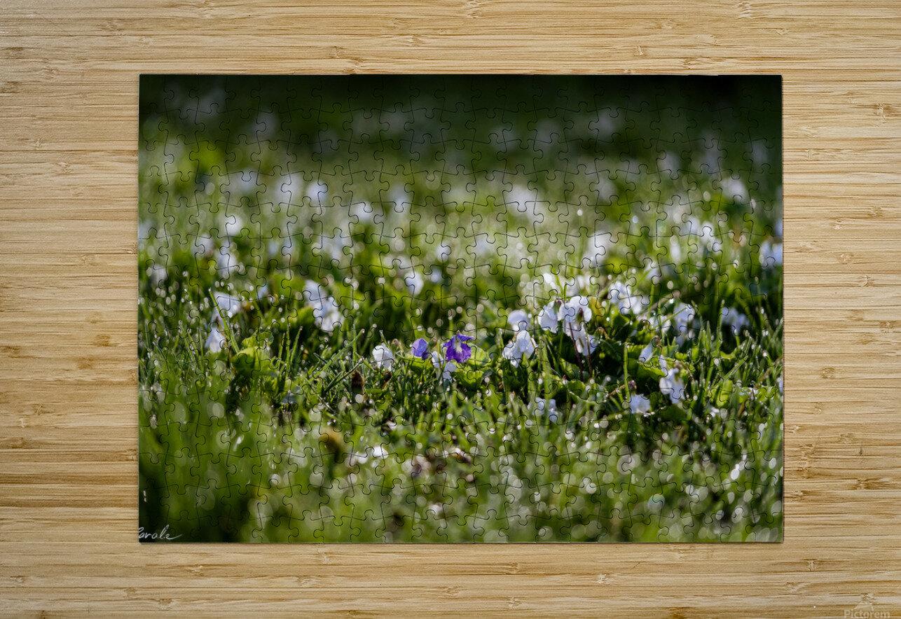 Confettis au jardin 2  Impression métal HD avec cadre flottant sur le dos