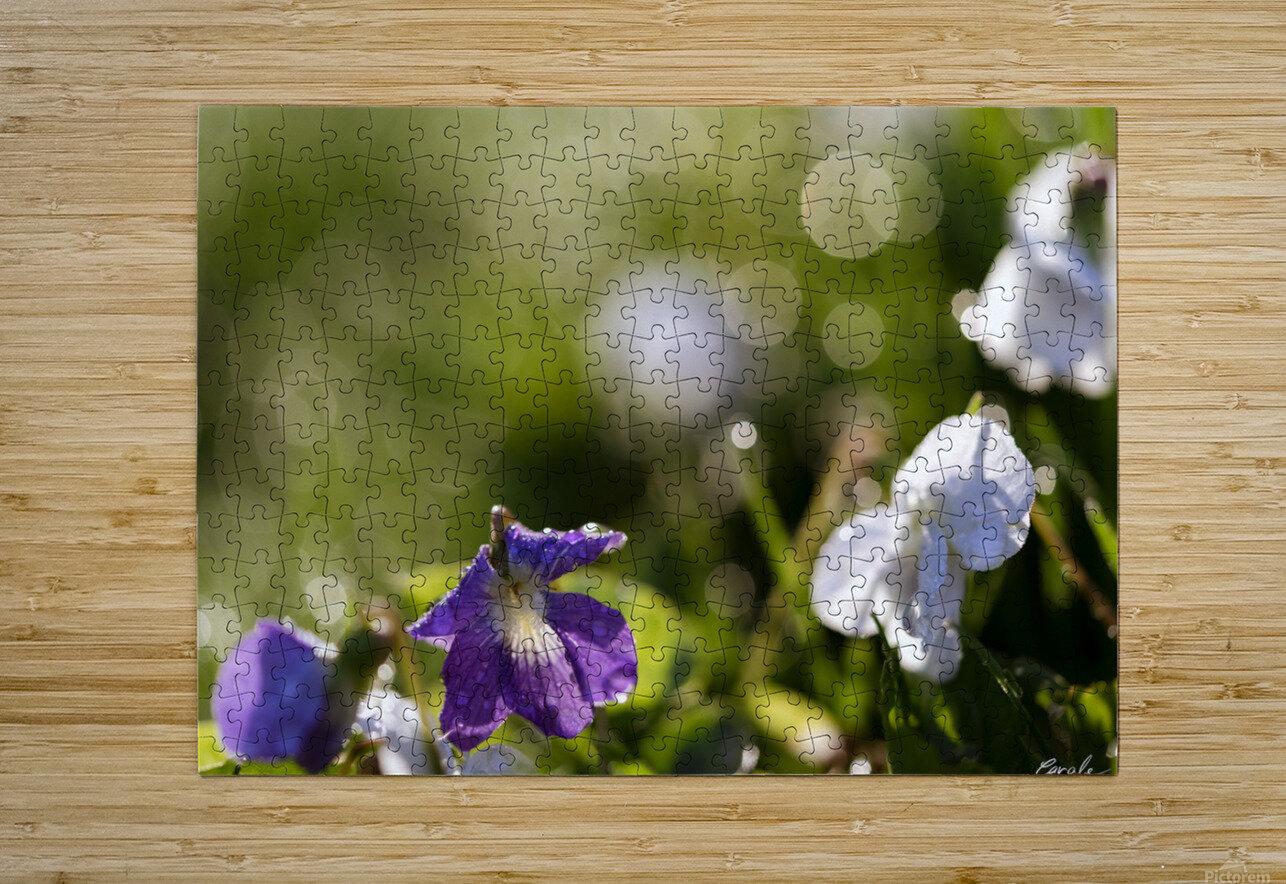 Confettis au jardin 4  Impression métal HD avec cadre flottant sur le dos