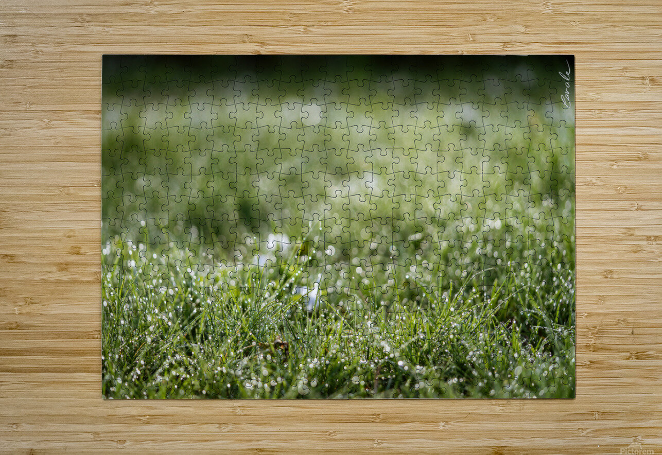Confettis au jardin 1  HD Metal print with Floating Frame on Back