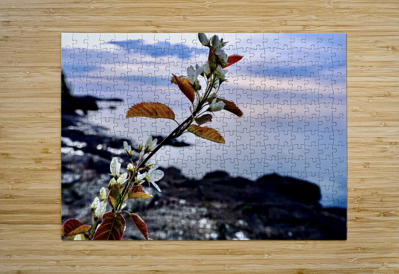 Flower on the Shoreline  HD Metal print with Floating Frame on Back