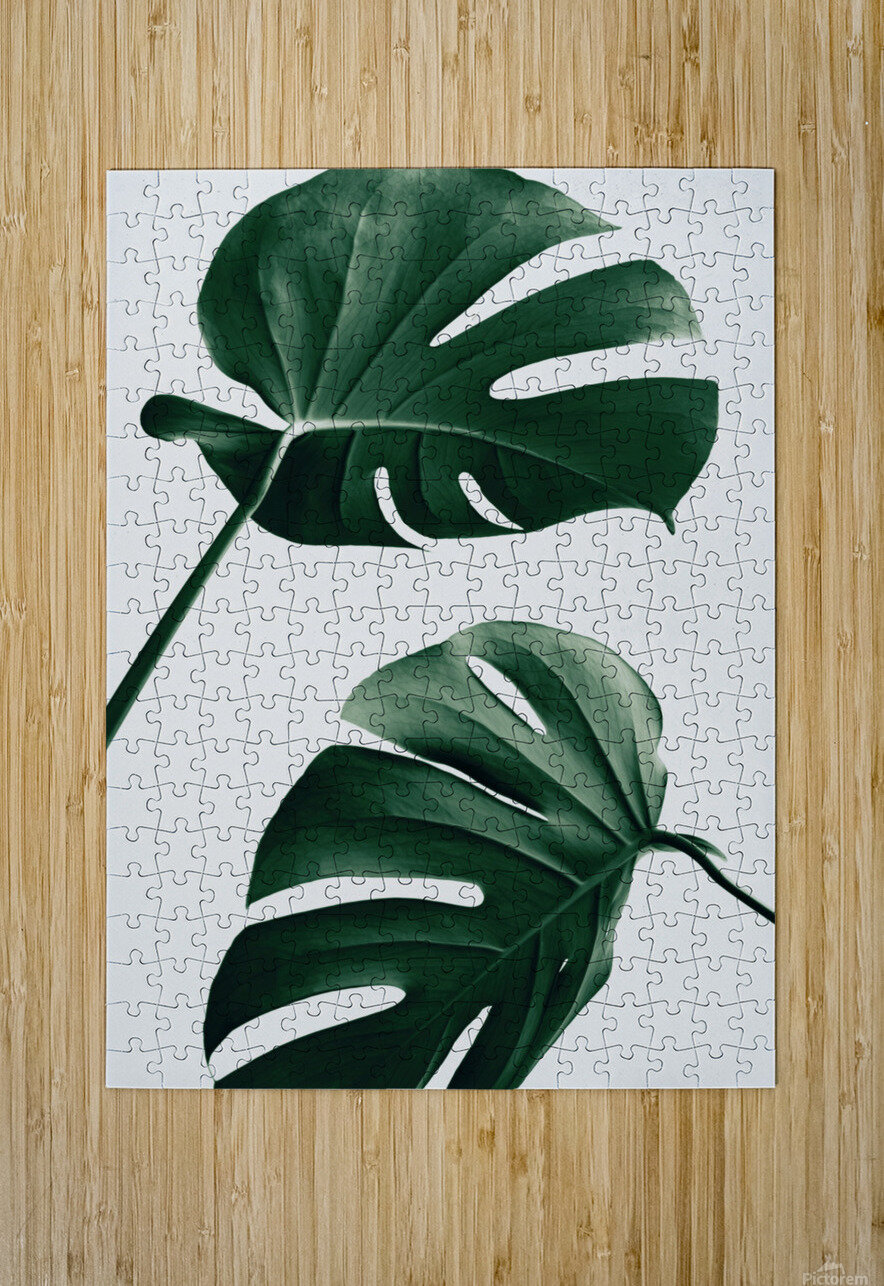 Monstera Natural 46  HD Metal print with Floating Frame on Back